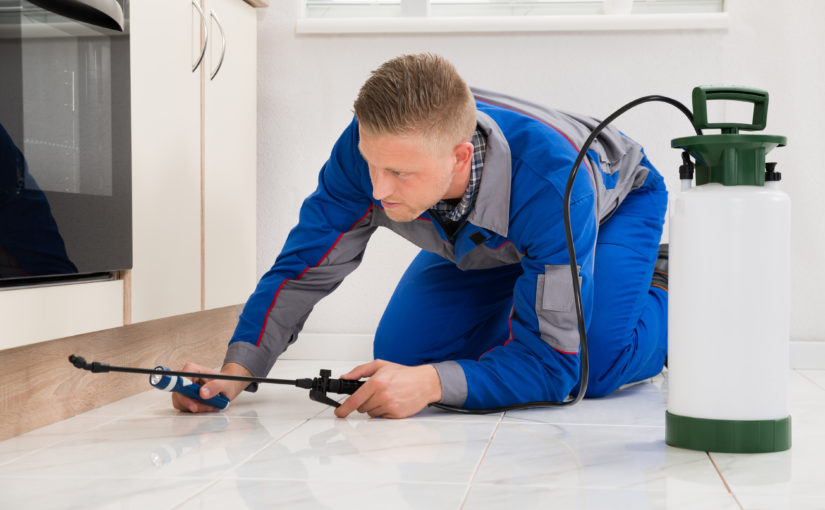 5 Advantages of Common Pest Management Providers in Toronto